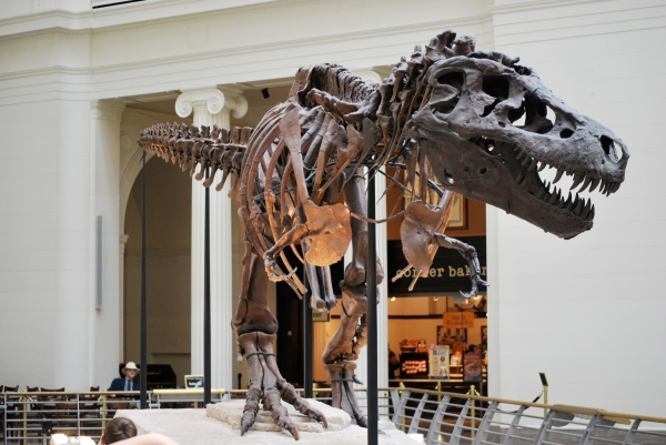 This is Sue; one of the best rex specimens in the world. See how different her skull is from the movie rex? And yes, actual paleontologists care about much much much less obvious details than this.