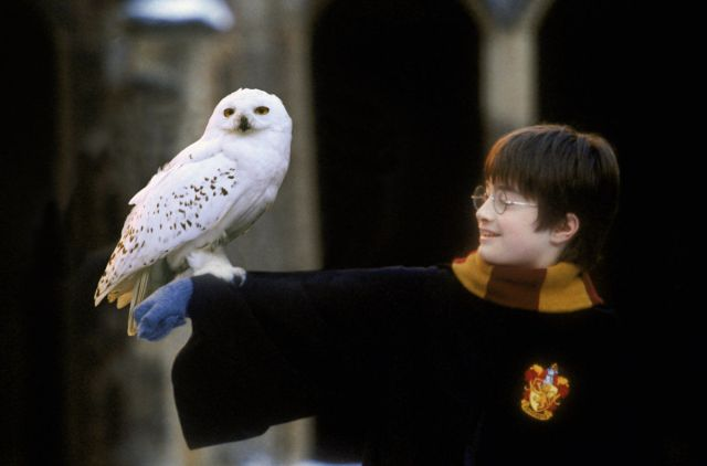 this-harry-potter-fan-theory-suggests-that-hedwig-s-death-had-a-deeper-meaning-than-we-owl-749502